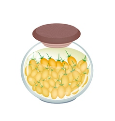 A jar of delicious pickled plum tomatoes vector