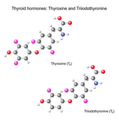 Structural chemical model of thyroid hormones vector