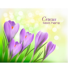 Colorful background with crocus vector