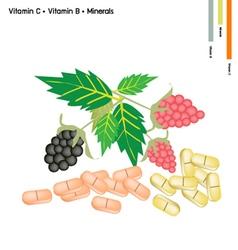 Raspberries and blackberries with vitamin k and b vector