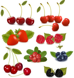 Fresh berries vector