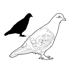 Pigeon two vector