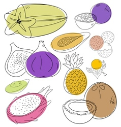 Exotic fruits vector