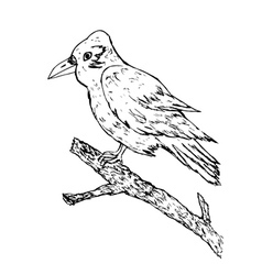 Crow sketch vector