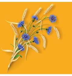 Cornflowers and wheat ears vector
