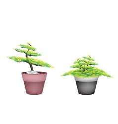 Two beautiful fir tree in flower pots vector