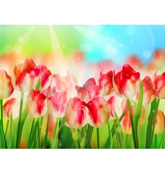 Beautiful colorful tulips in garden eps 10 vector