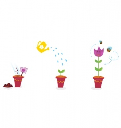 Garden flowers growth stages tulip vector