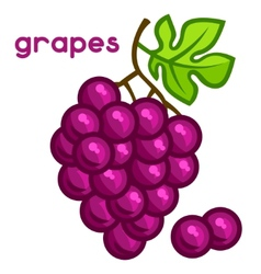 Stylized of fresh grapes on white vector