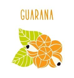 Guarana vector