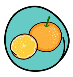 Two fresh oranges on round green background vector