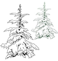 Snowy conifer vector