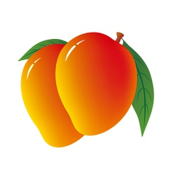 Mango on white background vector