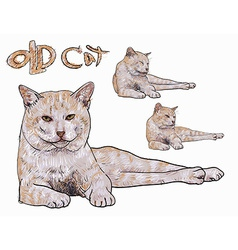 Old yellow cat vector