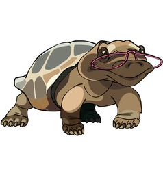 Brown tortoise with glasses vector