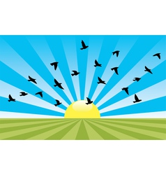 Rising sun and flying birds vector