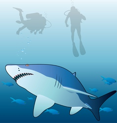 Shark and scuba divers vector