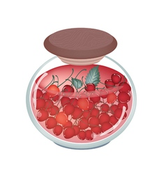 A jar of delicious preserved red cherries vector