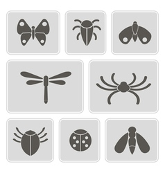 Monochrome icons with various insects vector