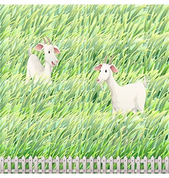 Two goats in the farm vector