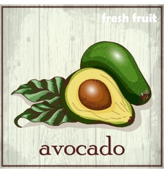 Hand drawing of avocado fresh fruit vector