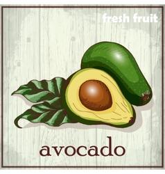 Hand drawing of avocado fresh fruit vector