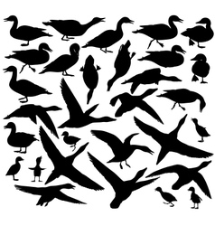 Duck silhouettes vector