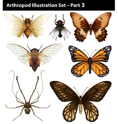 Arthropods vector
