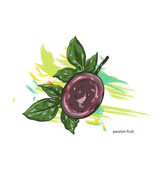 Passion fruit with colorful splashes vector