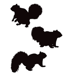 Squirrel silhouettes vector