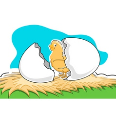 Chick with broken egg vector