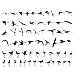 Sixty black-winged stilts vector