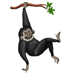 Gibbon vector