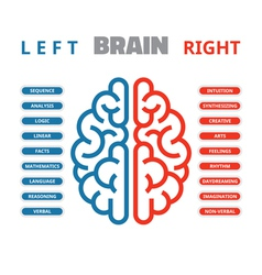 Left and right human brain vector