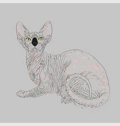 Sphynx cat entirely vector
