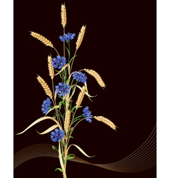 Cornflowers and wheat ears on black vector
