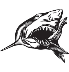 Big shark vector