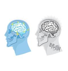 Bright brain in skull vector