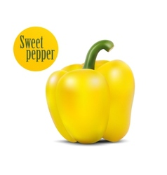 Photo-realistic of yellow sweet pepper vector