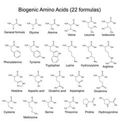 Twenty two bigenic amino acids vector
