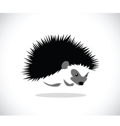 Hedgehog 2 vector