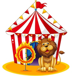A lion beside a fire hoop at the circus vector