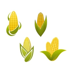 Yellow corn icons and symbols vector