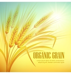 Wheat field background vector