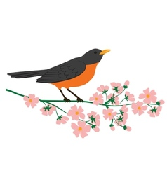 Robin bird vector