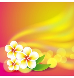 Frangipani flowers on colorful background vector