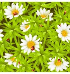 Chamomiles and ladybugs vector