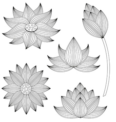 Lotus flower set on white background vector
