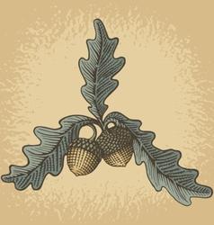 Acorn woodcut vector