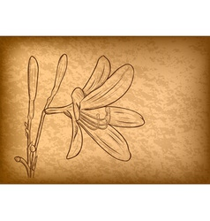 Flower on the brown paper vector